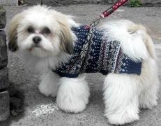 clevedondog1